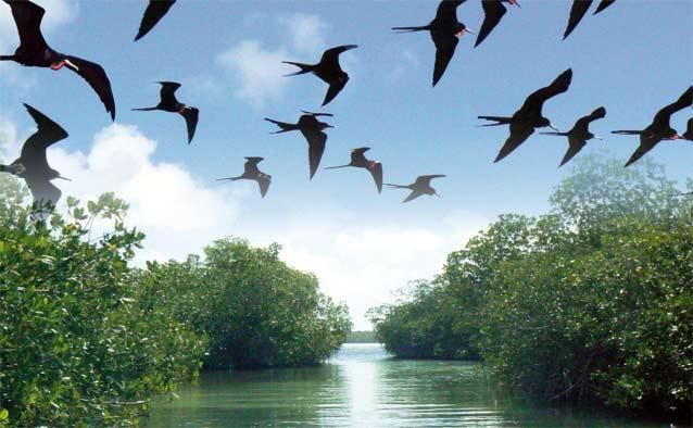 X Ministerio de Medio AmbienteX negocioX Parque Nacional del EsteX niegaX derechosX propietariosX parque ecoturístico